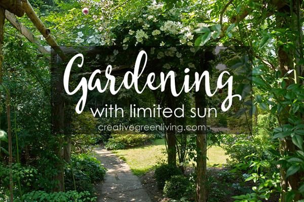 Des conseils incontournables pour les jardiniers avec le soleil limité – Comment avoir un jardin prospère même à l'ombre!