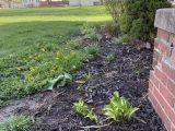 Garden Update – Redéfinition du lit!
