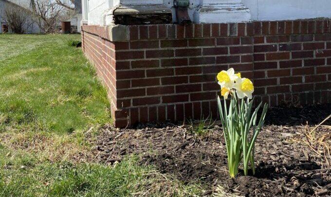 Nettoyage de printemps extérieur    Réalité Daydream